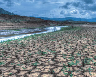 Global Dynamic Bond: managing climate opportunities and risks